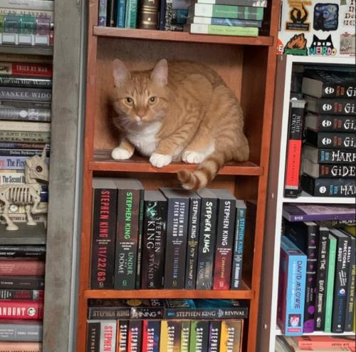 orange cat sitting on the shelf of a bookcase