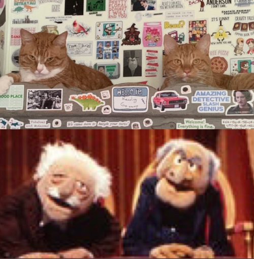 image of two cats above an image of the Muppets' Waldorf and Statler