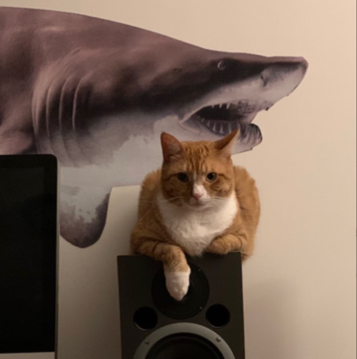 an orange cat sitting on a speaker in front of a large decal of a bull shark