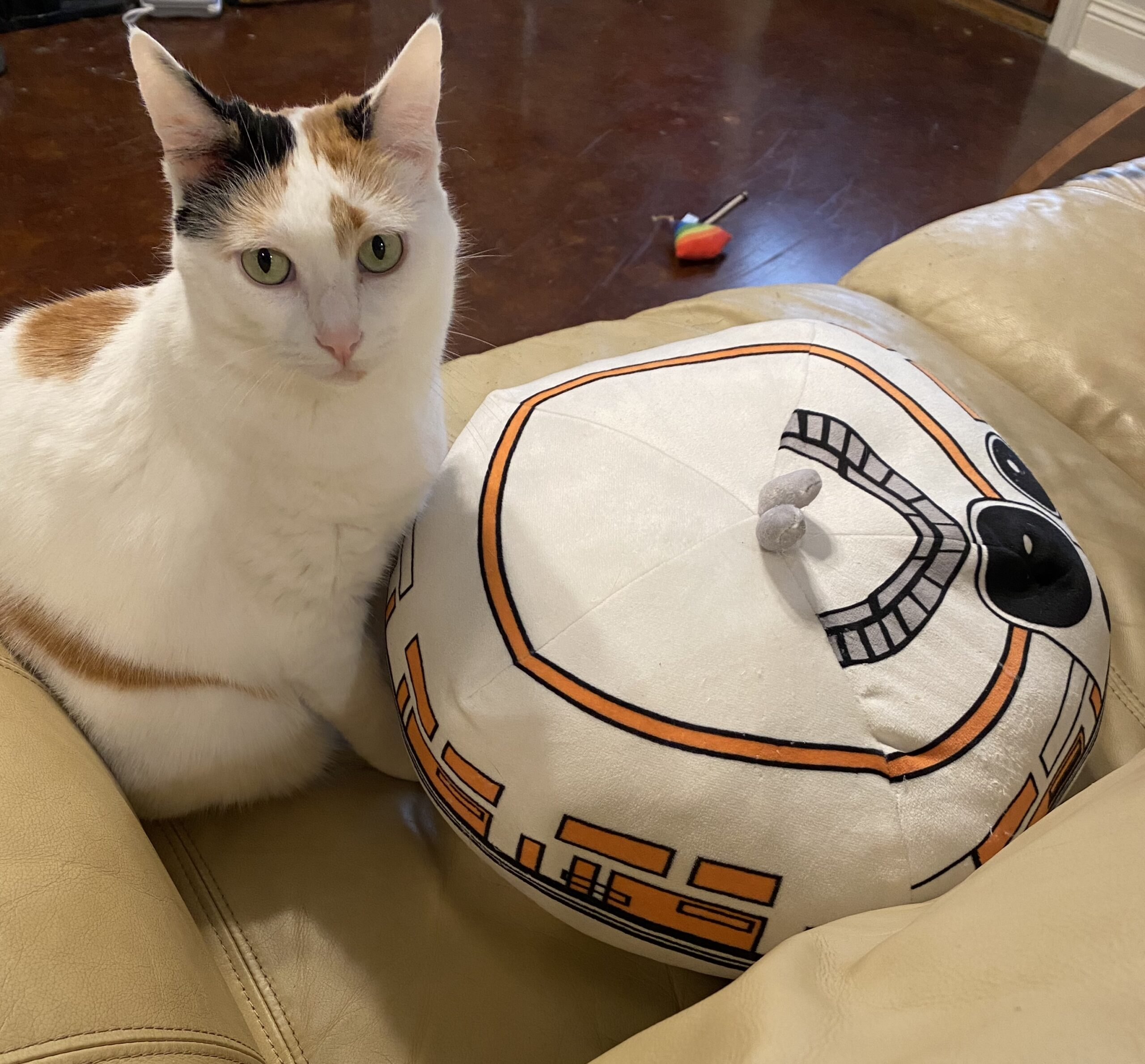 an orange and white cat next to an orange and white pillow
