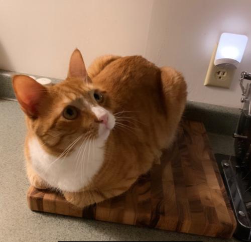 orange cat sitting on a brown cutting board